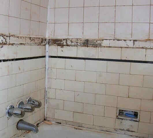 Identifying and Preventing Mold in the Bathroom